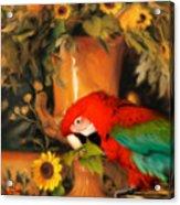 Scarlet Badboy Acrylic Print