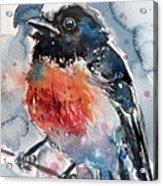 Scarlet Robin Acrylic Print