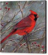 Scarlet Sentinel Acrylic Print