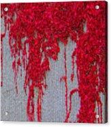 Scarlet Squiggle Acrylic Print