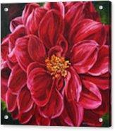 Scarlet Stunner Acrylic Print