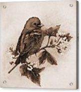 Scarlet Tanager - Tint Acrylic Print