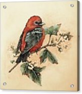 Scarlet Tanager - Vintage Acrylic Print
