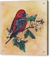 Scarlet Tanager - Acrylic Painting Acrylic Print