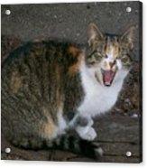 Scary Kitty Acrylic Print