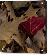 Scary Leaves Acrylic Print