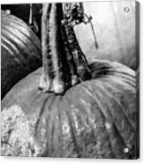 Scary Stem Pumpkin Acrylic Print