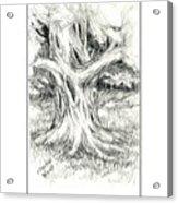 Scary Tree Acrylic Print