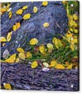 Scattered Aspen Leaves Acrylic Print