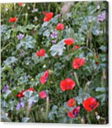 Scattered Everywhere Acrylic Print