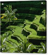 Scenic Valleys With Rice Fields In Bali Acrylic Print