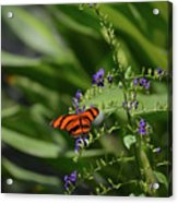 Scenic View Of An Orange Oak Tiger Butterfly Acrylic Print