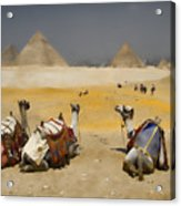 Scenic View Of The Giza Pyramids With Sitting Camels Acrylic Print