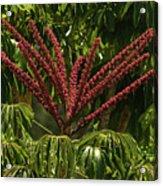 Schefflera Flower Acrylic Print