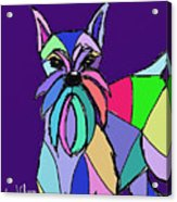 Schnauzer Colors Acrylic Print