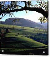 Schwarzwald Acrylic Print