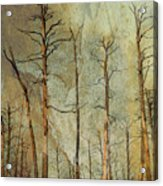 Scorched Forest Acrylic Print
