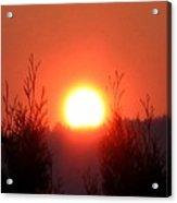 Scorching Sun Acrylic Print