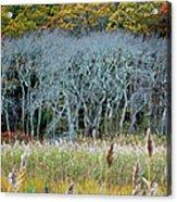 Scorton Creek Treeline Acrylic Print