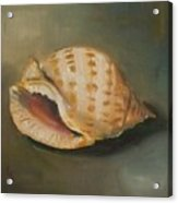 Scotch Bonnet Seashell Acrylic Print
