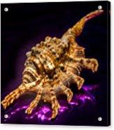 Scorpion Shell Acrylic Print