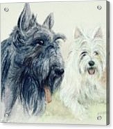 Scottie And Westie Acrylic Print