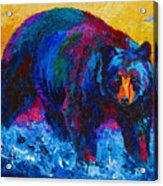 Scouting For Fish - Black Bear Acrylic Print by Marion Rose