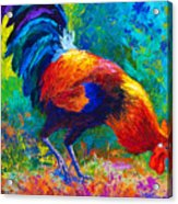 Scratchin' Rooster Acrylic Print