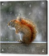 Screaming Squirrel  Acrylic Print