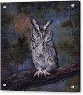 Screech Owl Acrylic Print
