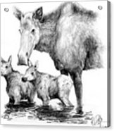 Scruffy Moose Family Acrylic Print