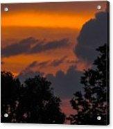 Mulberry Tree Sunrise Acrylic Print