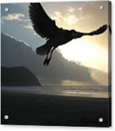 Sea Bird 3 Acrylic Print