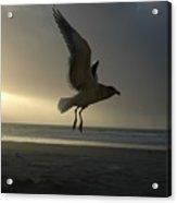 Sea Bird 6 Acrylic Print