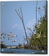Sea Bird Flight Acrylic Print