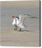 Sea Bird Song Acrylic Print