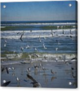 Sea Birds Feeding On Florida Coast Dsc00473_16 Acrylic Print