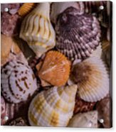 Sea Bones 19 Acrylic Print