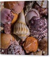 Sea Bones 20 Acrylic Print