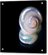 Sea Bones 26 Acrylic Print
