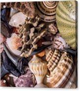 Sea Bones 30 Acrylic Print