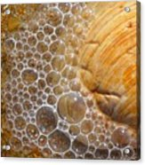 Sea Bubbles Acrylic Print