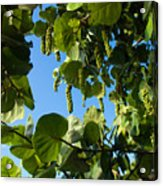 Sea Grapes In Summer Acrylic Print