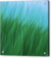 Sea Grass Breeze Acrylic Print