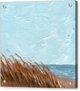 Sea Grass On Tybee Island Acrylic Print