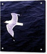 Sea Gull Over Water Dbwc Acrylic Print