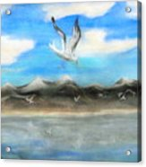 Sea Gulls Acrylic Print