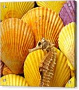 Sea Horse And Sea Shells Acrylic Print