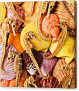 Sea Horses And Sea Shells Acrylic Print