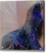 Sea Lion Constancesart Acrylic Print
